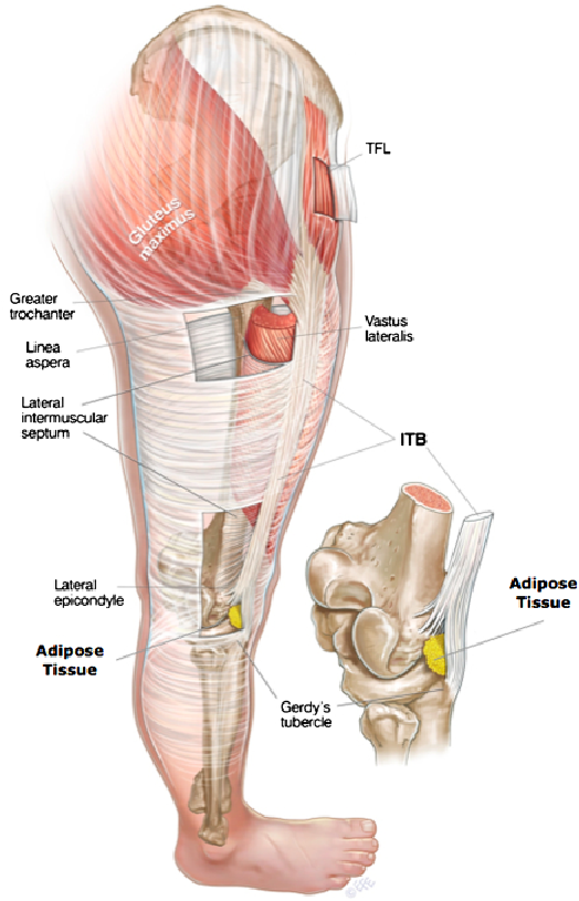 Fig-3-A-schematic-representation-of-the-anatomy-of-the-iliotibial ...